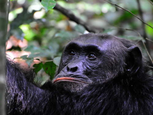 LIST & MAP NATIONAL PARKS UGANDA PDF: Reflecting Chimp.