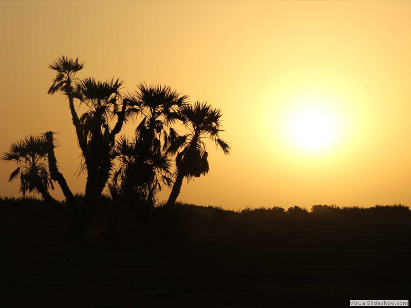 danakil-depression-desert-palm