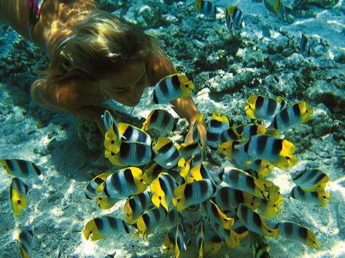 BEST NATIONAL PARKS IN THE WORLD: TOP 10 MOST VISITED WORLDWIDE: Snorkeling at the Pacific Reef.