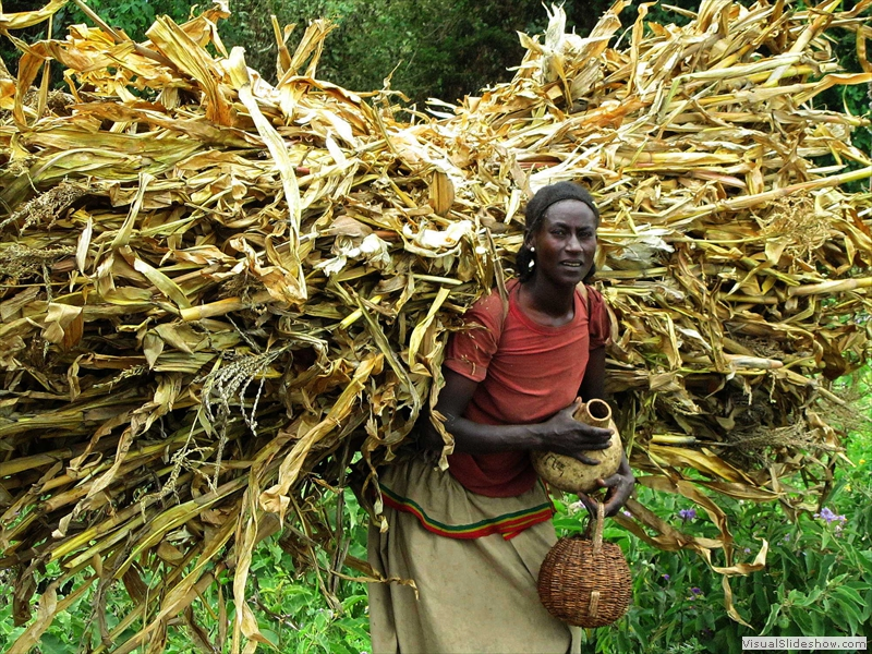 woman-carrying-corn-ethiopia