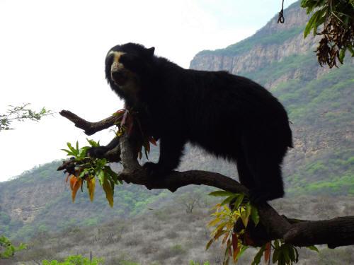 Best Manu National Park Peru Tours